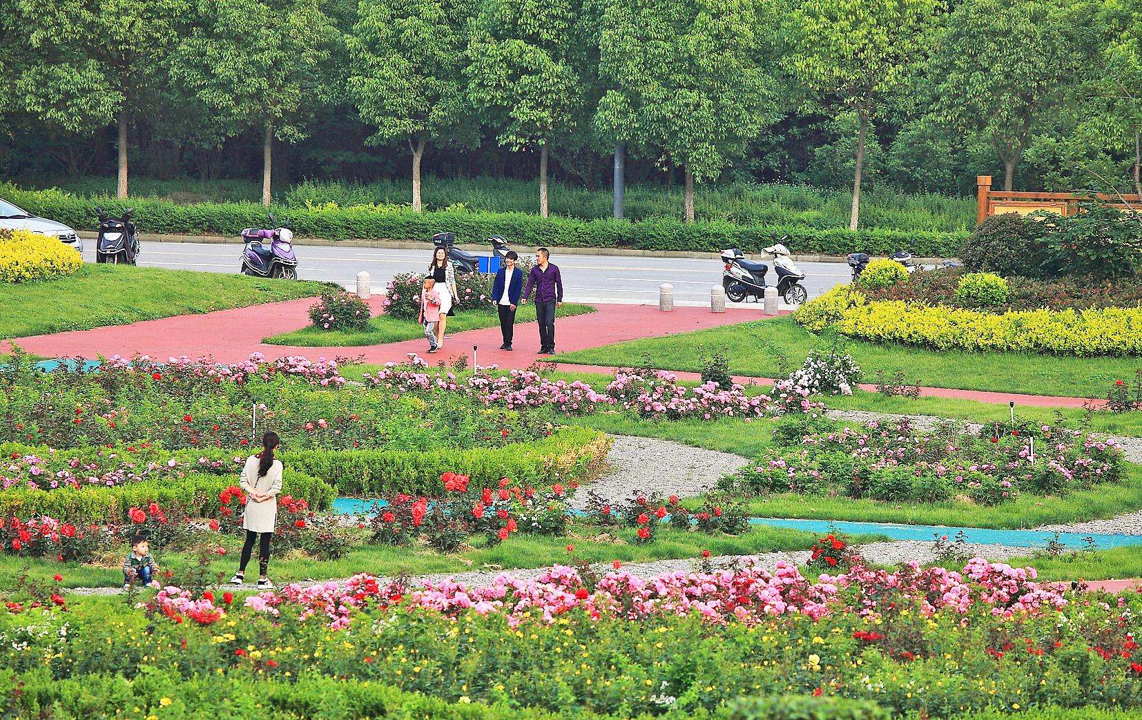 58盐龙湖生态示范园玫瑰园IMG_0627.JPG
