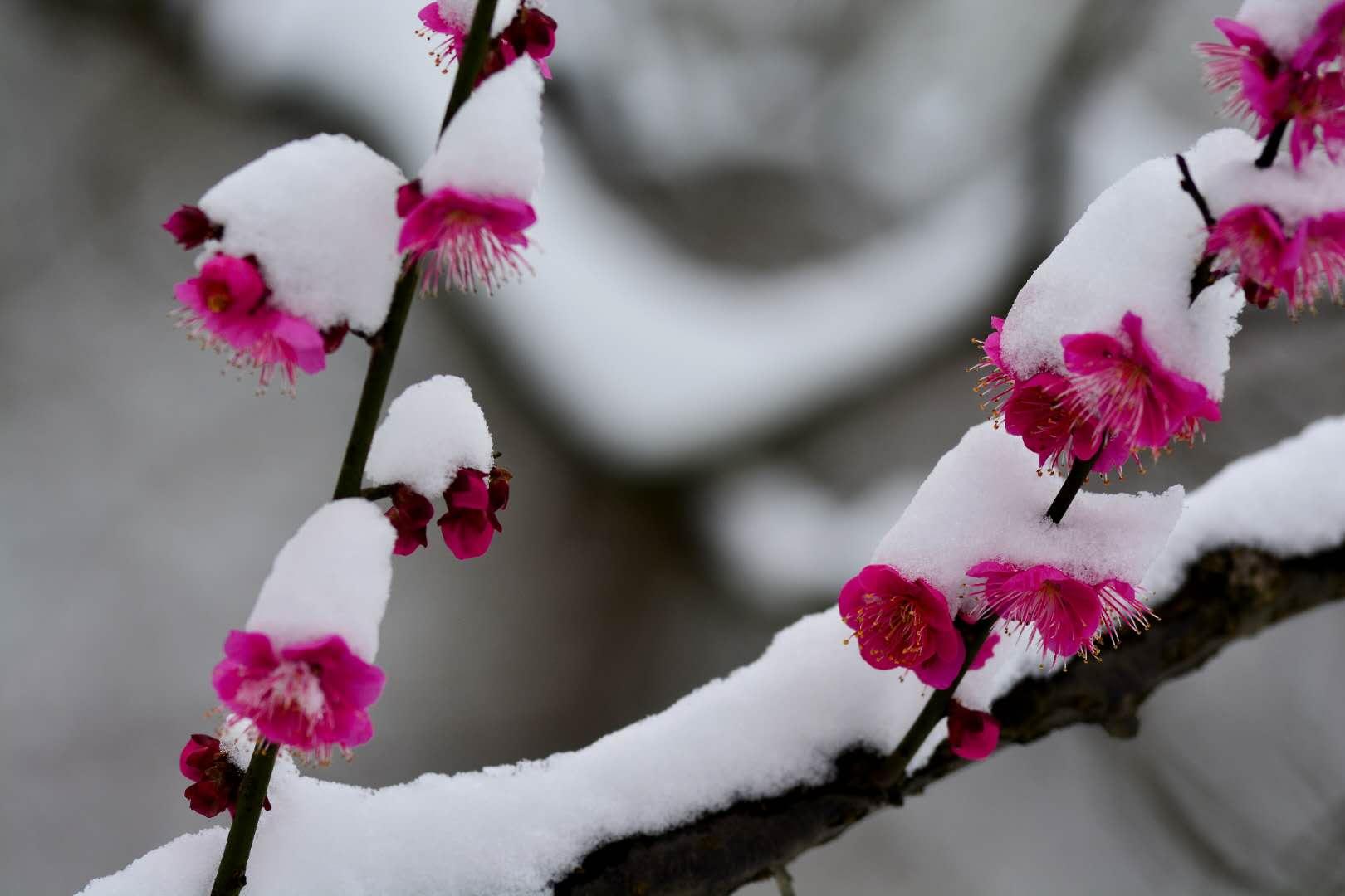 下雪的时候
